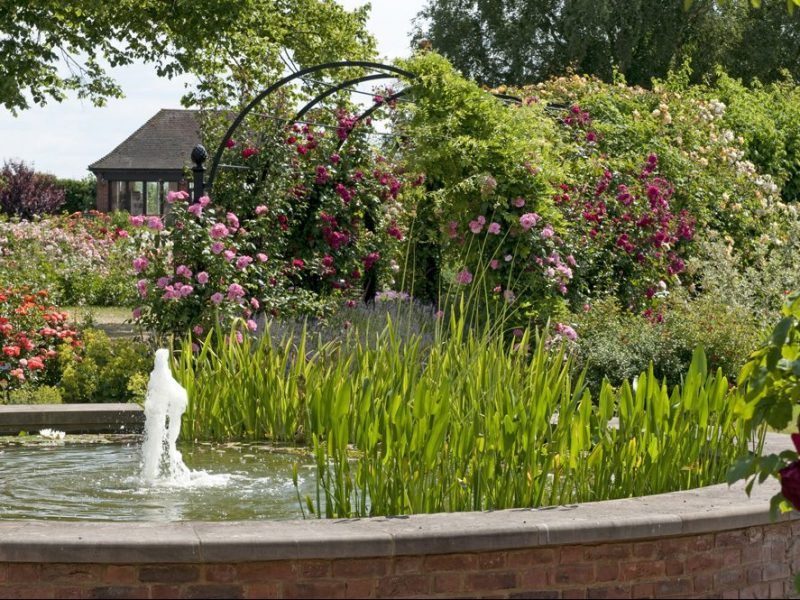 Water feature and rose pergola in Royal National Rose Society rose gardens