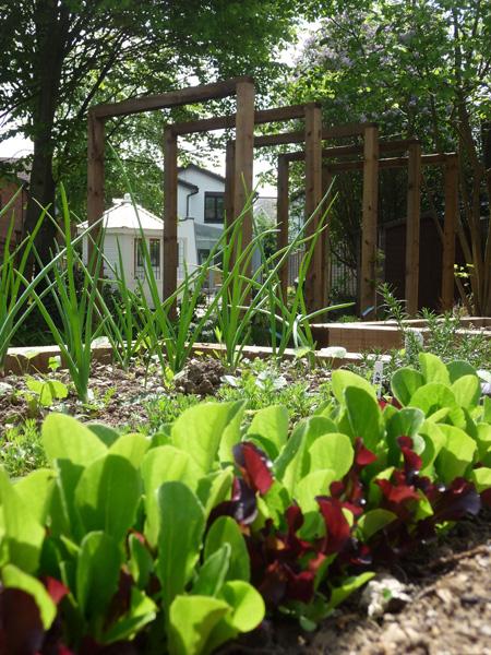 wooden pergola in contemporary garden
