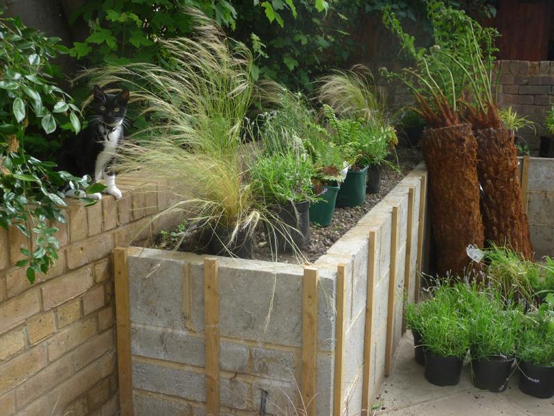 cat in modern city garden being built
