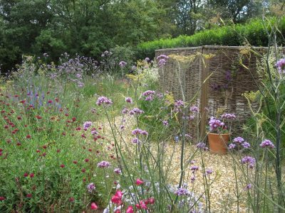 Verbena bonariensis and bronze fennel